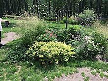Garden5_2