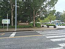 Kodomo_zoo_park