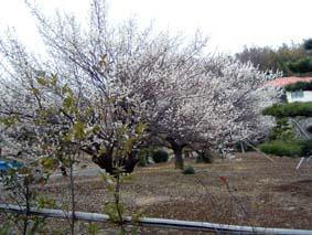 shinyoshida3