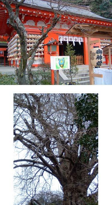 Kamakura2d