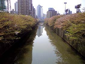 Meguro_gawa1