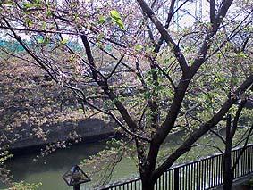 Meguro_gawa2