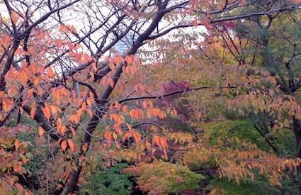 Ueno_park
