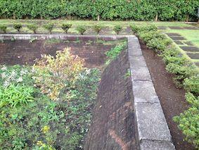 Waterplant2