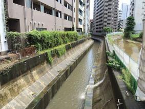 Shibuya_rv
