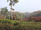 Monomiyama_view