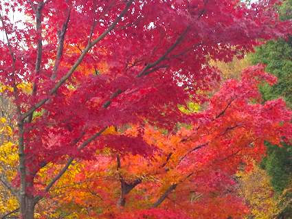 Color_leaves
