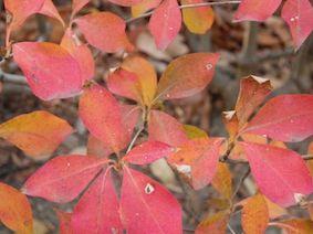 Early_autumn