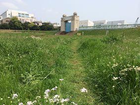 Tamagawara