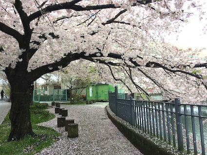 Ookagawa2