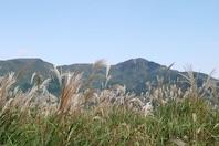 Sengokubara